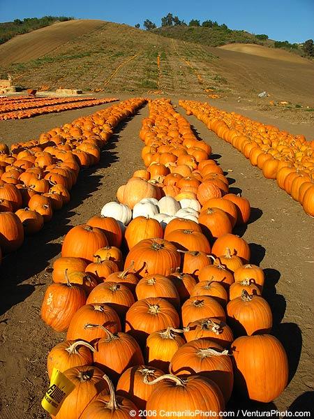 Camarillo Halloween