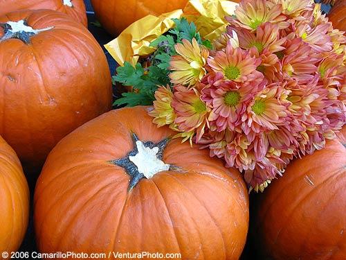 Camarillo Store Pumpkins